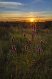 Lavender ηλιοβασίλεμα Στοκ εικόνα με δικαίωμα ελεύθερης χρήσης