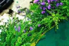 Lavender θάμνοι με τη σκηνική διακόσμηση Στοκ φωτογραφία με δικαίωμα ελεύθερης χρήσης