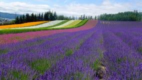 Lavender και ενός άλλων λουλουδιών τομείς Στοκ εικόνα με δικαίωμα ελεύθερης χρήσης