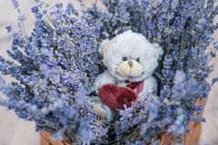 Lavender και το παιχνίδι αντέχουν στο καλάθι Στοκ Εικόνες