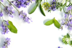 Lavender και χορτάρια Στοκ Φωτογραφίες