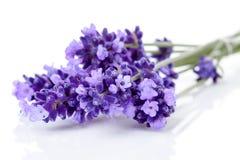 Lavender κλαδίσκων στην κινηματογράφηση σε πρώτο πλάνο Στοκ Εικόνα