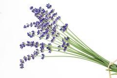 lavender λευκό Στοκ εικόνα με δικαίωμα ελεύθερης χρήσης