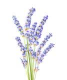 Lavender λουλούδια Στοκ φωτογραφία με δικαίωμα ελεύθερης χρήσης
