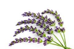 Lavender λουλούδια Στοκ Εικόνες