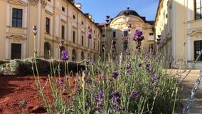 Lavender μπροστά από το κάστρο Austerlitz, Δημοκρατία της Τσεχίας απόθεμα βίντεο