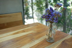 Lavender ουρανού στο δοχείο βάζων Στοκ Φωτογραφίες