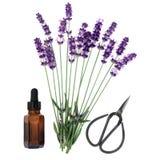 Lavender ουσία χορταριών Στοκ εικόνα με δικαίωμα ελεύθερης χρήσης