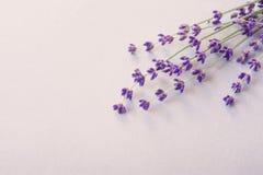 Lavender λουλούδια για την κάρτα σας Όμορφο lavender άνοιξη υπόβαθρο λουλουδιών Lavender χρώμα lavender δεσμών Στοκ Εικόνες