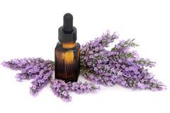 Lavender λουλούδια χορταριών Στοκ φωτογραφίες με δικαίωμα ελεύθερης χρήσης