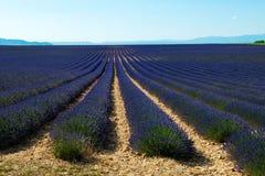 Lavender πεδίο στην Προβηγκία Στοκ Εικόνα