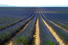 Lavender πεδίο στην Προβηγκία Στοκ φωτογραφία με δικαίωμα ελεύθερης χρήσης