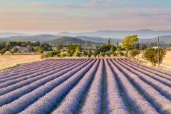 Lavender πεδίο στην Προβηγκία στοκ εικόνες με δικαίωμα ελεύθερης χρήσης