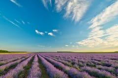 Lavender πεδίο στοκ εικόνα με δικαίωμα ελεύθερης χρήσης