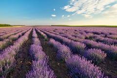 Lavender πεδίο στοκ φωτογραφία