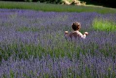 lavender πεδίων μικρό παιδί Στοκ Εικόνες
