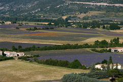 lavender πεδίων παπαρούνα Στοκ εικόνες με δικαίωμα ελεύθερης χρήσης