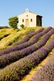 lavender πεδίων παρεκκλησιών Στοκ Εικόνες