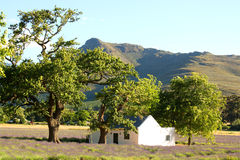lavender πεδίων της Αφρικής αγροτικός νότος σκηνής Στοκ φωτογραφία με δικαίωμα ελεύθερης χρήσης