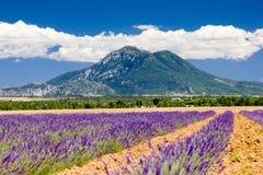 lavender πεδίων Στοκ Εικόνα
