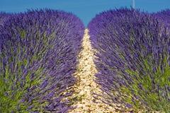 lavender πεδίων Στοκ φωτογραφίες με δικαίωμα ελεύθερης χρήσης