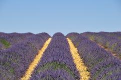 lavender πεδίων Στοκ Φωτογραφία