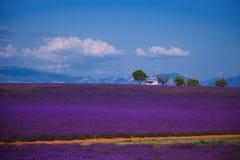 Lavender πεδία Στοκ εικόνα με δικαίωμα ελεύθερης χρήσης