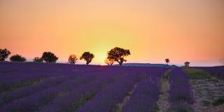 Lavender πεδία Στοκ φωτογραφία με δικαίωμα ελεύθερης χρήσης
