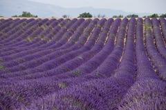 Lavender πεδία Στοκ Εικόνα