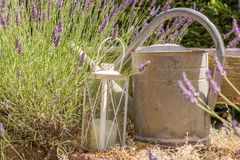 Lavender που διακοσμείται με το φανάρι και ένα παλαιό πότισμα μπορεί στοκ φωτογραφίες