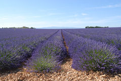 lavender Προβηγκία πεδίων Στοκ Εικόνες