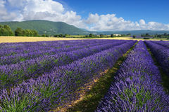 lavender Προβηγκία της Γαλλίας πεδίων Στοκ Φωτογραφίες