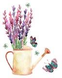 Lavender, Προβηγκία, watercolor Στοκ εικόνα με δικαίωμα ελεύθερης χρήσης