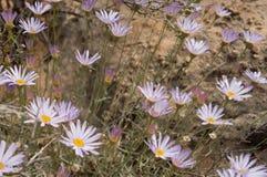 Lavender προσιτότητα λουλουδιών για τον ήλιο στοκ φωτογραφία με δικαίωμα ελεύθερης χρήσης
