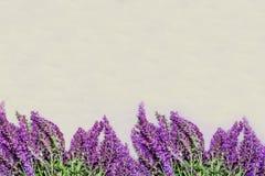Lavender στο άσπρο υπόβαθρο Στοκ Φωτογραφία