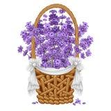 Lavender στο καλάθι Στοκ εικόνα με δικαίωμα ελεύθερης χρήσης