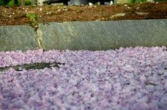 Lavender συντρίμμια στοκ εικόνες