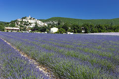 lavender της Γαλλίας χωριό στοκ φωτογραφίες