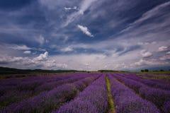 Lavender τομέας κοντά σε Kazanlak, Βουλγαρία Στοκ φωτογραφίες με δικαίωμα ελεύθερης χρήσης