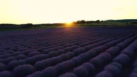 Lavender τομέας στην Προβηγκία και όμορφο ηλιοβασίλεμα πέρα από το καλλιεργήσιμο έδαφος φιλμ μικρού μήκους