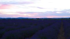 Lavender τομέας το καλοκαίρι σε Valensole απόθεμα βίντεο