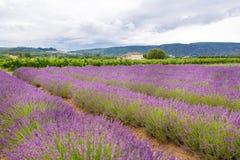 Lavender τομείς κοντά σε Valensole στην Προβηγκία, Γαλλία Στοκ Εικόνα