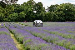 Lavender τομείς στην Αγγλία Στοκ Φωτογραφίες