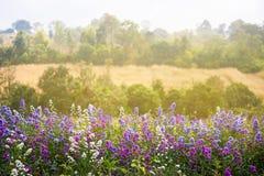 Lavender τομείς στο πρώτο πλάνο, δάσος ως υπόβαθρο Όμορφο Β Στοκ Εικόνες
