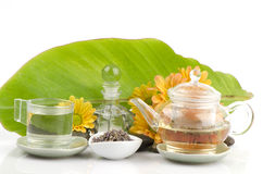 Lavender τσάι λουλουδιών (angustifolia Lavandula (Ηνωμένο Βασίλειο) Στοκ εικόνα με δικαίωμα ελεύθερης χρήσης