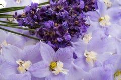 lavender υπόβαθρο από τα λουλούδια Στοκ φωτογραφίες με δικαίωμα ελεύθερης χρήσης