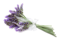 Free Lavender Royalty Free Stock Images - 12721239