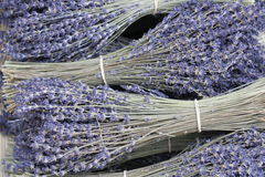 The lavender. Perfumed lavender in violet provencal country Royalty Free Stock Image