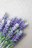 Lavender. Bunch of purple lavender on the table Royalty Free Stock Photo