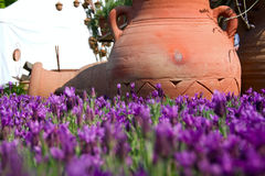 Lavender. Flowers in detail out of focus with an amphora in background Stock Photography